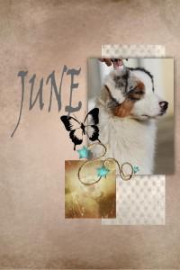 page-june-petitformat